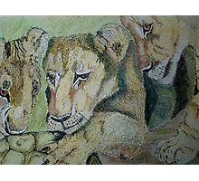 Curious Cubs Photographic Print