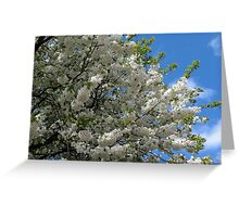 Beautiful Blossoms of Spring  Greeting Card