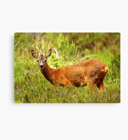 Knee Deep Canvas Print