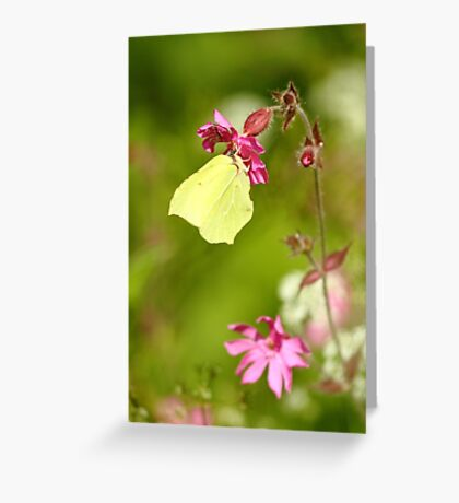 The Wings Of Spring Greeting Card