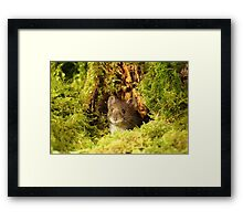 Off To Explore The World Framed Print