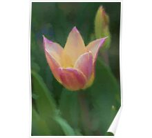 tulip in the garden Poster