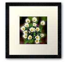 Spot the Hyacinth Framed Print
