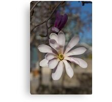 The Perfect Magnolia Blossom Canvas Print