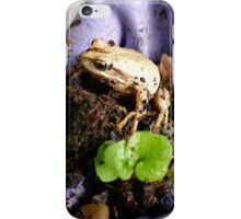 Whistling Brown Tree Frog - NZ iPhone Case/Skin