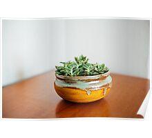 Succulents in ceramic bowl Poster