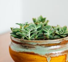 Succulents in ceramic bowl Sticker