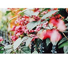 Pink flowers blossoming Photographic Print