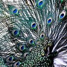 peacock's feathers by Jo-PinX