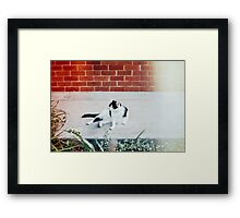 Black & White Cat Framed Print