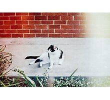 Black & White Cat Photographic Print