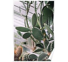 Group of Cacti in Greenhouse Poster