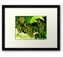 Green Grapes  ^ Framed Print