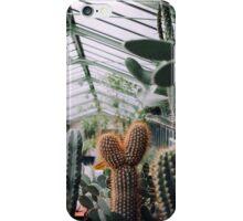 Cacti in Greenhouse iPhone Case/Skin