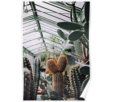 Cacti in Greenhouse Poster