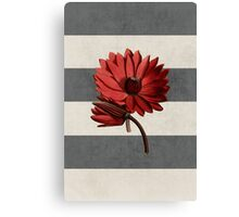 botanical stripes - red water lily Canvas Print
