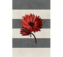 botanical stripes - red water lily Photographic Print