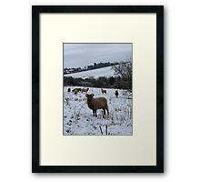 Winter Manx Loaghtan Framed Print