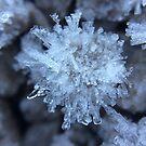 frost by NuclearJawa