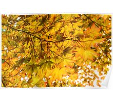 Look Up and Enjoy the Brilliant Autumn Colors Poster