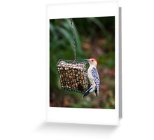 Red Bellied Woodpecker Feeding Greeting Card