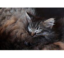 Sleeping Kitten Photographic Print