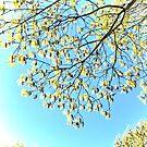 ...Springtime sunshine makes me happy... by Rick Gold