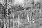 Aspen Ambience Monochrome by Eric Glaser