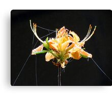 Flame Azalea's Spider Silk Canvas Print