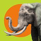 Wild Elephant by Eric Fan