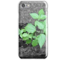 Dead tree with new growth iPhone Case/Skin