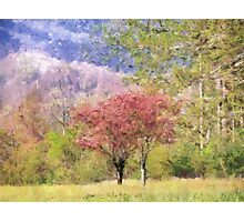 Valley Trees In Springtime Photographic Print