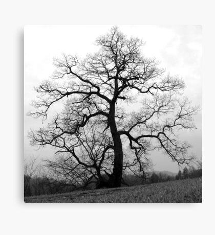 WINTER PRINCESS TREE Canvas Print
