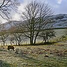 Wintry Morning by Harry Oldmeadow