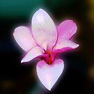 Magnolia Dancing by BlueMoonRose