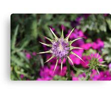 Dying Thistle Canvas Print
