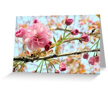 Cherry Blossoms, Vancouver Greeting Card