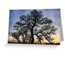 Naked Tree Greeting Card