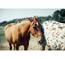 Two Horses on a French Farm Photographic Print
