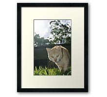Ringo the Cat Framed Print
