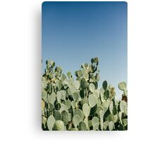 Large Prickly Pear Cactus against Blue Sky Canvas Print