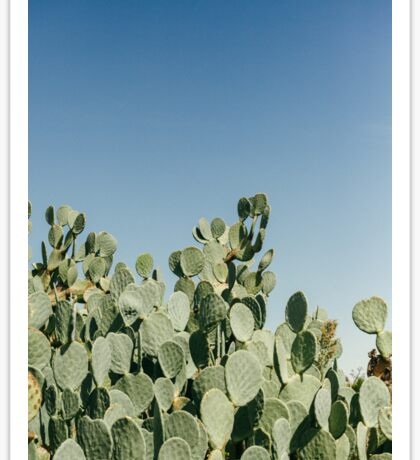 Large Prickly Pear Cactus against Blue Sky Sticker
