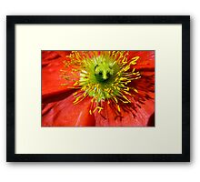Just Lovely Framed Print