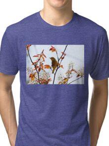 Yellow Warbler Tri-blend T-Shirt