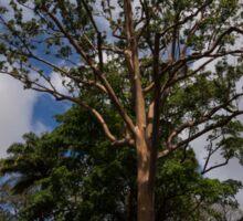 Rainbow Eucalyptus - Tall, Proud and Beautiful Sticker