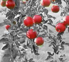 Red Apples Sticker