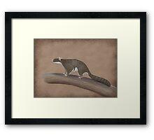 Volaticotherium antiquum - extinct gliding mammal Framed Print