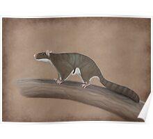 Volaticotherium antiquum - extinct gliding mammal Poster