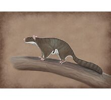 Volaticotherium antiquum - extinct gliding mammal Photographic Print