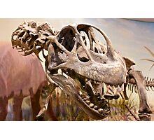 Brachiosaurus  Photographic Print
